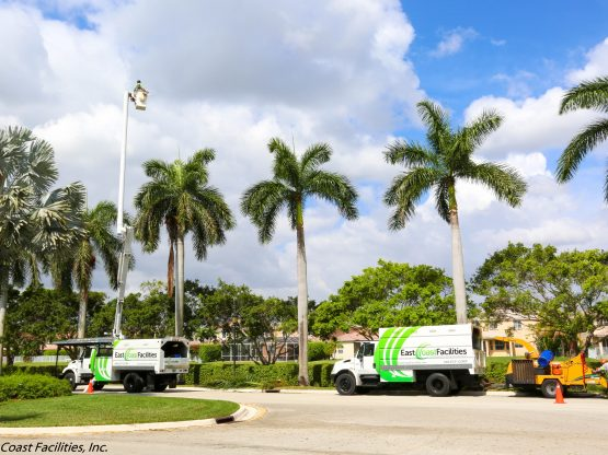 Professional Tree Trimming – The Ridges Maintenance Association, Weston Florida